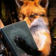 Fox Ryder